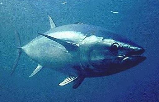 animaux ocean pacifique